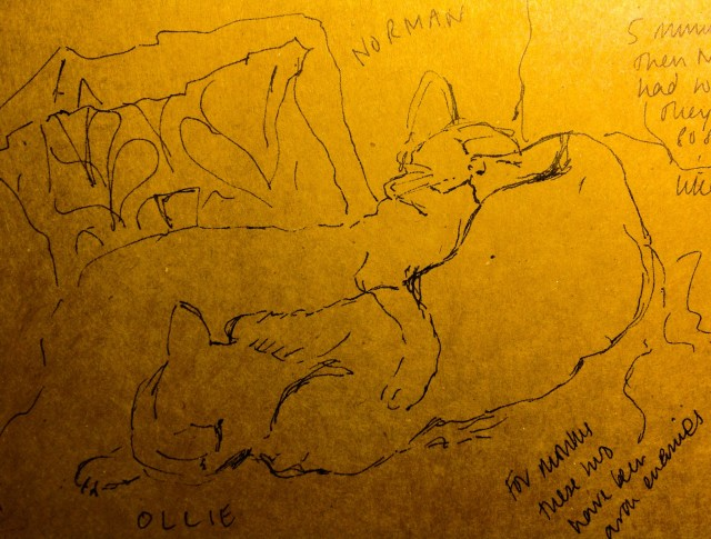 Contour Line Drawing Of A Cat : Sketching the week drawing street