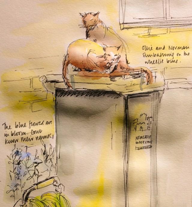 cats on the wheelie bins