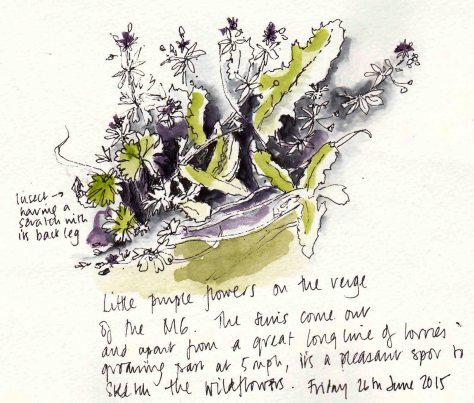 sketch of weeds and insects