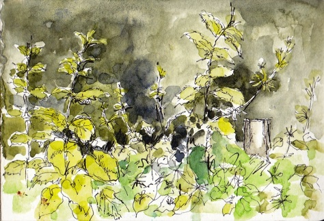 sketch of weeds in hedgerow
