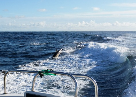 5 Dolphins KildaCruise